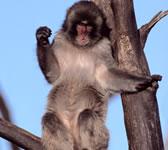 monkey-smile